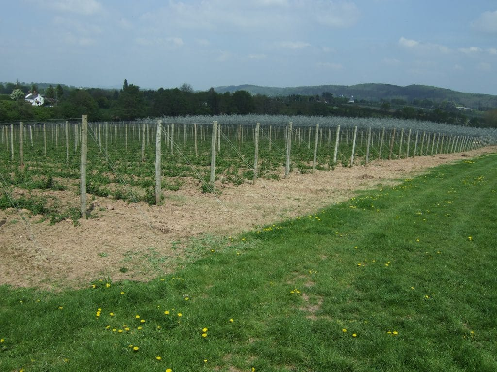 Photo of hop yards covered in netting