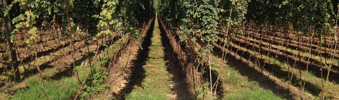 Contrats expirés - Photo of hop rows. Purely decorative for the expired contracts page