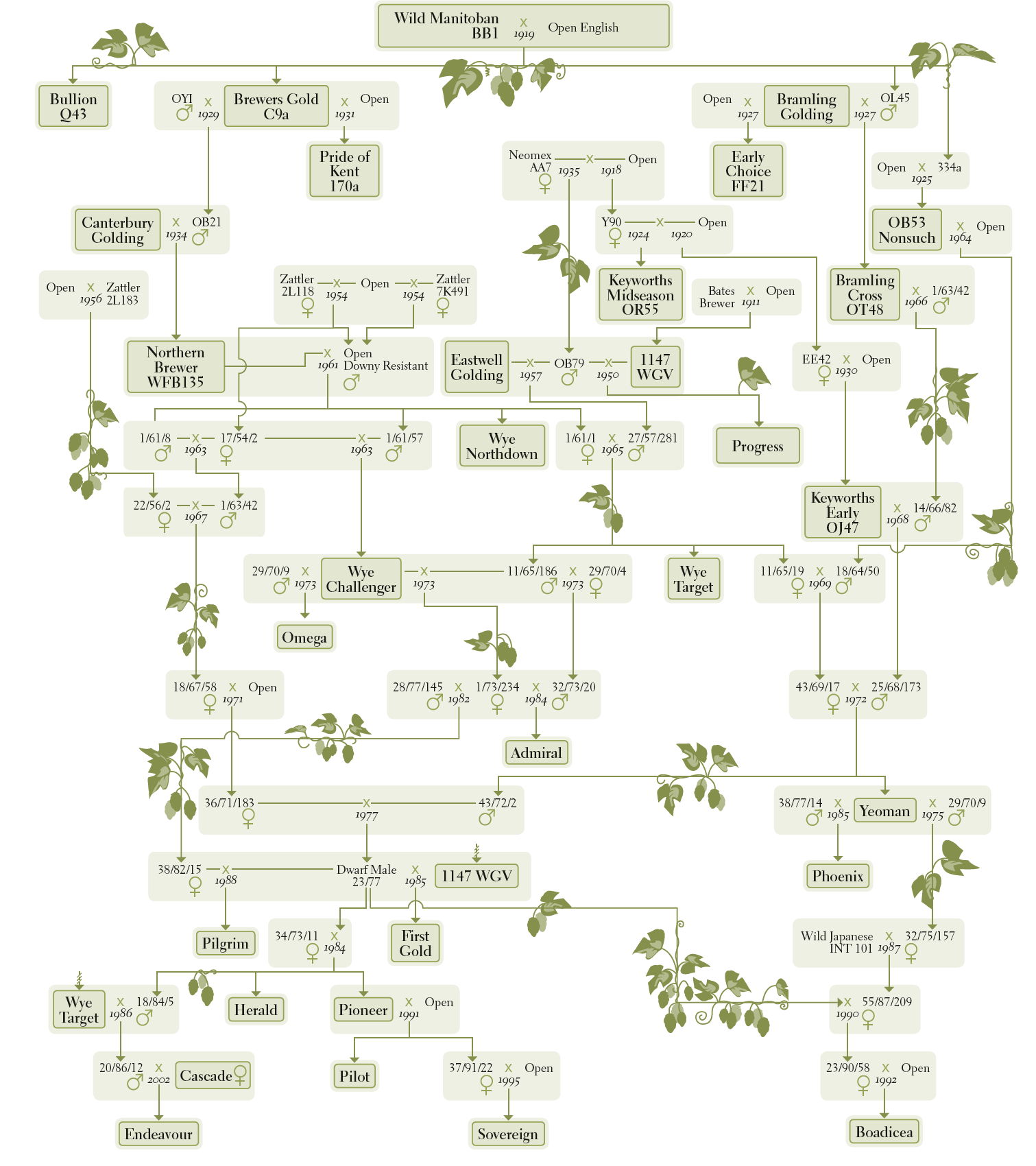 Picture of the family tree of British hop varieties